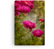 Passion for Pink Canvas Print