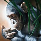 """""""In Respect of the Chimpanzee"""" by Michelle Caitens"""