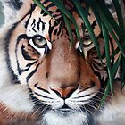 """""""In Respect of the Tiger"""" by Michelle Caitens"""