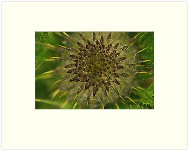 New thistle by Al Williscroft