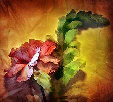 Carnation Admiration by CarolM