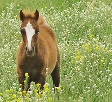 Filly in the Meadow by lorilee