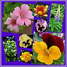 June Garden Flowers Collage by BlueMoonRose
