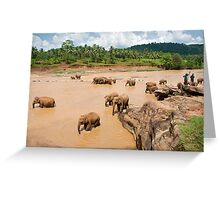 Bathing Time - Pinnawella Elephant Orphanage Greeting Card