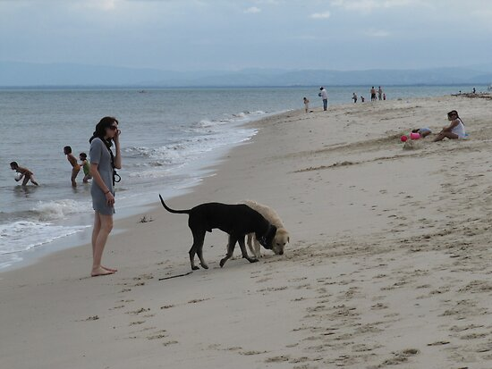 'GUESS WHAT THE DOGS JUST FOUND!' Bribie Island, Q. by Rita Blom