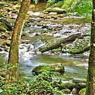 Smokey Mountain Park Stream - North Carolina by Glenn Cecero