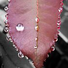 Red rose leaf after rain by ShineArt
