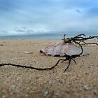 Shell on St. Leonards beach by ShineArt