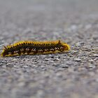 Caterpillar by stay-focussed