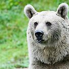 Portrait of a bear  by torishaa