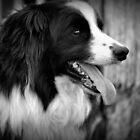 My Dogs  calendar   2012 by jainiemac