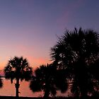 Palms at Sunrise by ejlinkphoto