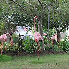 Va Va Voom in Pink by James  Key