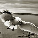 Swoop by Heather King