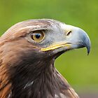 Golden Eagle Portrait by M.S. Photography & Art