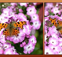 Comma Collage by missmoneypenny