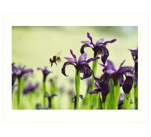 Iris Bee Art Print