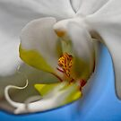 """young ORCHID"""" by grsphoto"