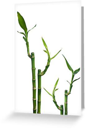 Bamboo by homydesign