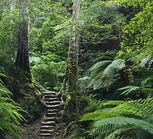The Fernery, Grand Canyon. by Andy Newman
