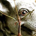 Seeing Eye to Eye by Kate Eller