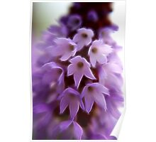 Pretty Purple Posy Poster
