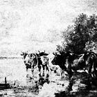 Wading Cows by garts