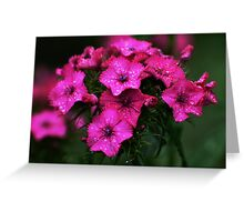 Pink blossoms with drops Greeting Card