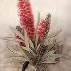 Callistemon Foresterae:  Population 3000 by Paul Kalemba