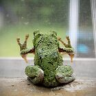 Gray Tree Frog by Becky Trudell