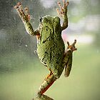 Gray Tree Frog Part 2 by Becky Trudell