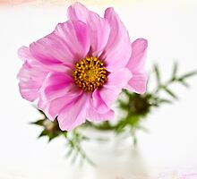 Cosmos in a glass jar by inkedsandra