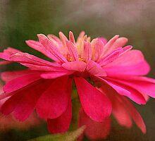 Pink Zinnia by Brenda Burnett