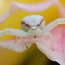 White spider by Barbara Anderson