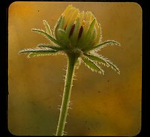 TTV-FLOWER. by mikepemberton