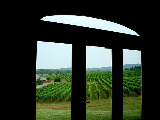 Vineyard View  ^ by ctheworld