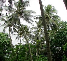 Coconut Palms by kreativekate