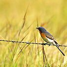 Bluebird on a Wire by Melissa-Louise