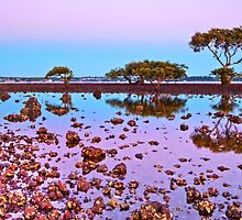 Winter Reflections - Cleveland Point. Qld by Beth  Wode