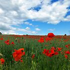 Poppy Fields of Oxfordshire by vivsworld