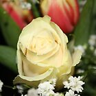 Cream Rose by Daniel Gore
