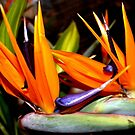 ELEGANT BIRD OF PARADISE by Esperanza Gallego