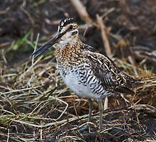Good day for snipe by jamesmcdonald