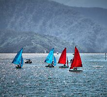 Regatta - Picton by Lynne Haselden