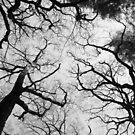 A Network of Trees by Debbie Thatcher