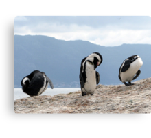 Three wise penguins Canvas Print