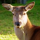 Oops!, No One Told Me It Was Stag Night!! - Deer - NZFemale buck by AndreaEL