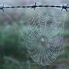 Dew on Spiders Web - Echuca by jonxiv