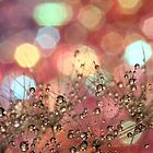 Sparkle Party by Amy Dee