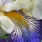 Japanese Iris by art2plunder